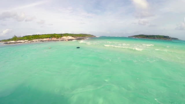 The swimming pigs in caribbean sea video