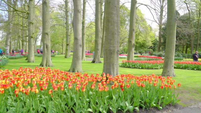 背の高い木々 と、キューケンホフでオレンジ色の花 - キューケンホフ公園点の映像素材/bロール