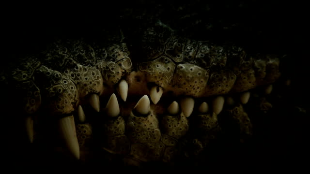 the teeth of the crocodile close-up - dragon stock videos and b-roll footage