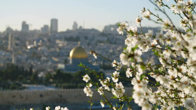 The Temple mount in old city Jerusalem with flowers in the foreground video