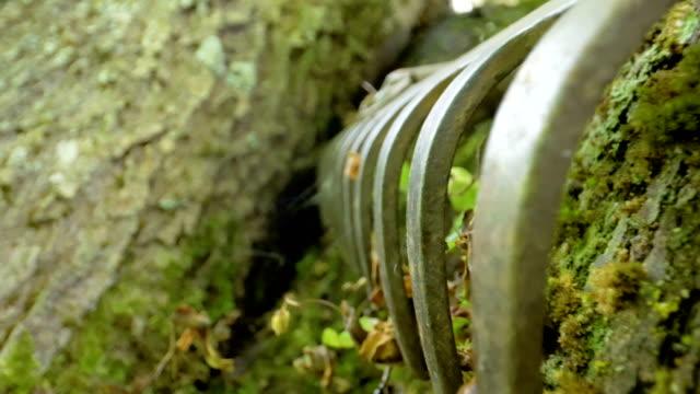 木の側の熊手の先端 ビデオ