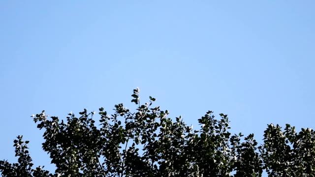 yavaş hareket mavi bir gökyüzü ile bir ağaç gölgelik üst - sale stok videoları ve detay görüntü çekimi