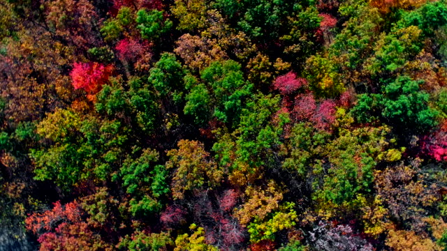 the top view on the forest during the fall foliage season in appalachian, poconos, pennsylvania, with fall foliage. aerial drone video with spinning camera motion. - горы поконо стоковые видео и кадры b-roll