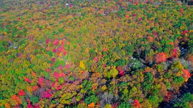die draufsicht auf den wald während der falljahreszeit laub in appalachian, poconos, pennsylvania, mit herbstlaub. luftbild-drohne video. - gebirge pocono mountains stock-videos und b-roll-filmmaterial