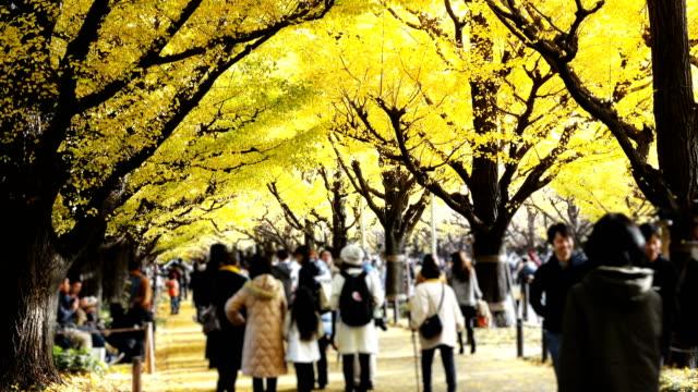 4K: The Tourist at Walking at Jingu Gaien Ginkgo Avenue in Tokyo, Japan. Defocused Video 4K: The Tourist at Walking at Jingu Gaien Ginkgo Avenue in Tokyo, Japan. Defocused. 4K(UHD) 3840x2160 format. ginkgo stock videos & royalty-free footage