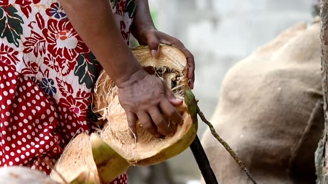 vídeos de stock e filmes b-roll de the traditional technique of aceh is peeling the coconut with a spear (sundak u) - oleo palma