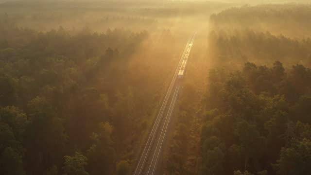 pociąg przechodzi przez las o świcie, promienie słońca oświetlają mgłę nad lasem - wagon kolejowy filmów i materiałów b-roll