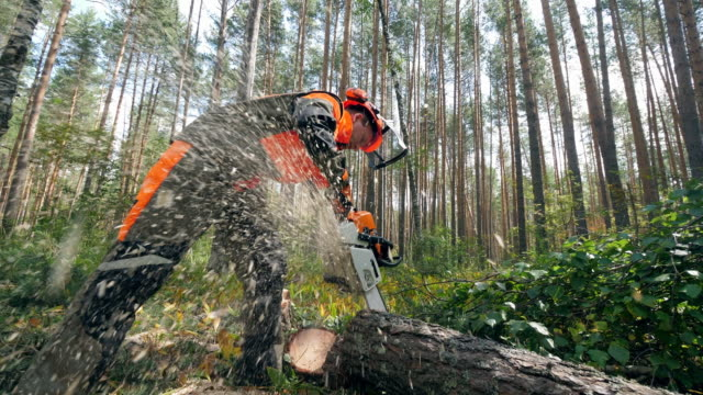 the tree is getting sawn by a male worker with a chainsaw - motosega video stock e b–roll