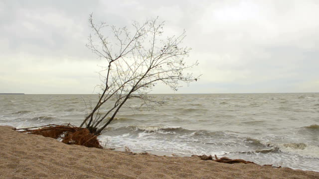 The tree on the beach after the storm video