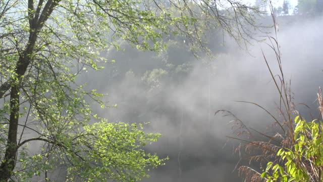 die bäume im nebel - longji tetian stock-videos und b-roll-filmmaterial