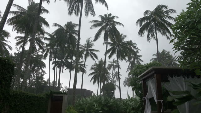 The tropical rain and strong wind swings palm trees in the tropical resort video