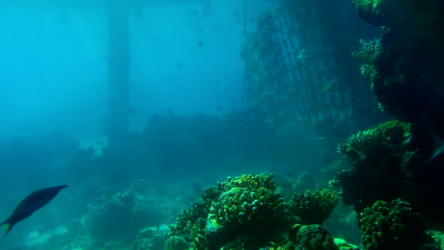 the underwater world of the Red Sea the underwater world of the Red Sea ocean floor stock videos & royalty-free footage