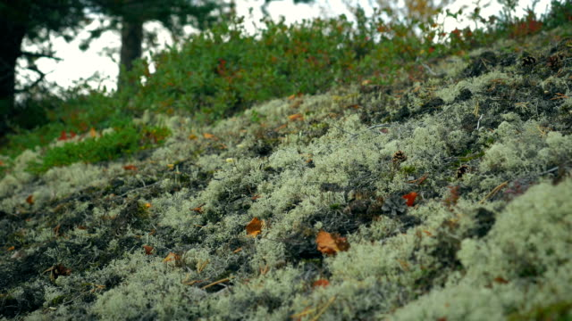 The vegetation of the Arctic tundra video