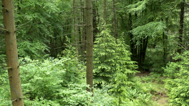 The view from a drone as it flies slowly into in an area of Scottish forest. video