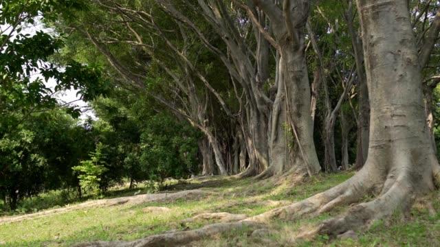 vidéos et rushes de la vue du parc de la ville. paysages naturels en asie. - racine partie d'une plante