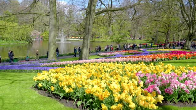 キューケンホフ花庭の花の様子 - キューケンホフ公園点の映像素材/bロール