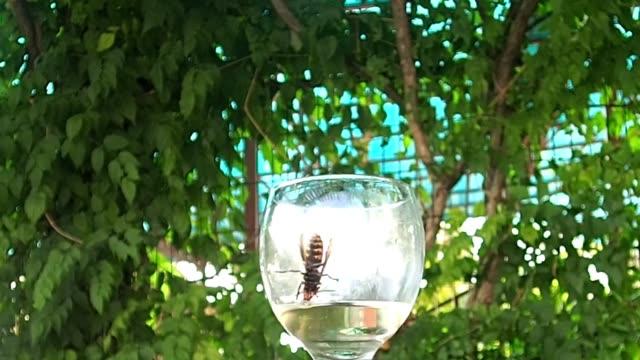 die wespe trinkt wasser aus einem glas und fällt und steigt dann aus und fliegt weg - hornisse stock-videos und b-roll-filmmaterial