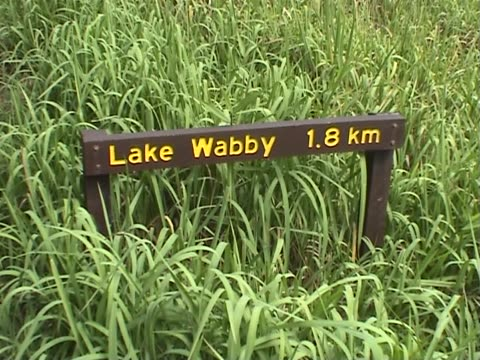 The Way To Lake Wabby Tourists walking on the path towards the Lake Wabby, Fraser Island, Australia. mid adult men stock videos & royalty-free footage