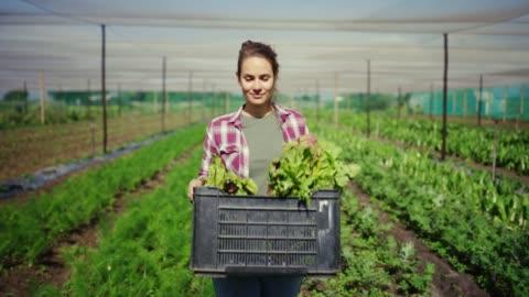 il tempo è stato perfetto per il raccolto - agricoltura video stock e b–roll