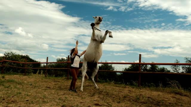 vidéos et rushes de le cheval blanc se dresse majestueusement. - dressage équestre