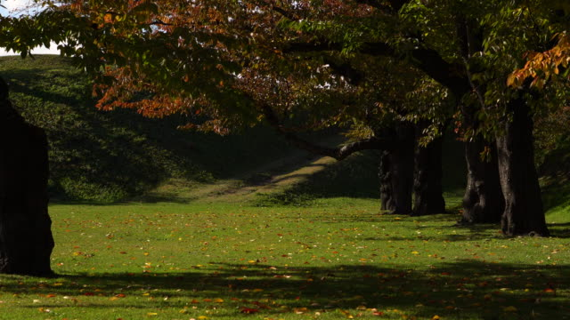 (Wide shot) The wind blew the yellow  and red trees in the park(Autumn Season sunlight lawn)
