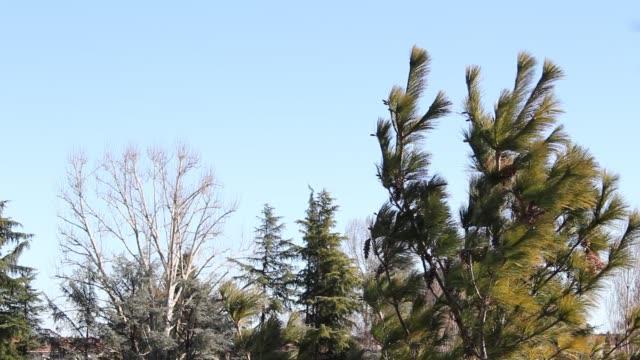 vinden flyttar anläggningen - halvmåne form bildbanksvideor och videomaterial från bakom kulisserna