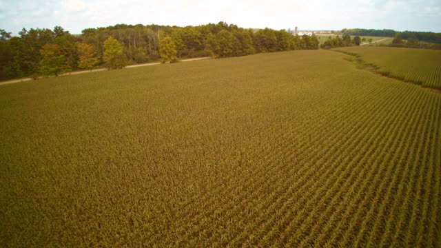 The wind power farm in the corn fields in Ontario province, Canada. Aerial drone video. video