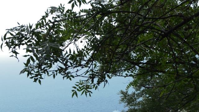 vinden skakar grenarna i träden, beskåda av det blå havet från ovan - lucia bildbanksvideor och videomaterial från bakom kulisserna