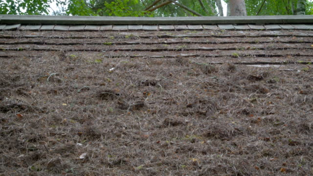 the withered plants on the roof of a house - feltro video stock e b–roll