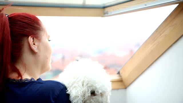 窓から白い犬の外観を持つ女性 - ビションフリーゼ点の映像素材/bロール