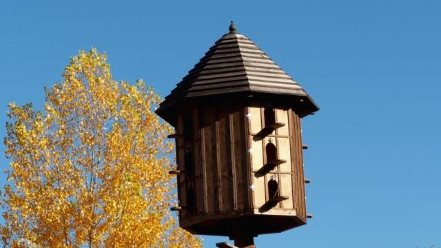vídeos de stock, filmes e b-roll de o pombal de madeira sobre o fundo do céu azul. um pombo grande loft ou pombal. - rústico