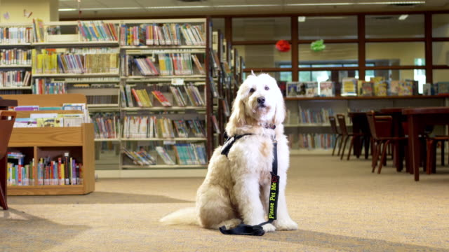 therapy dog sitting in public library - cane addestrato video stock e b–roll