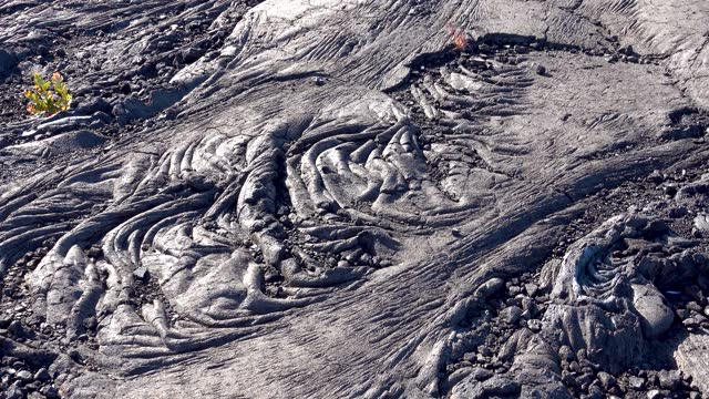 There are some vigorous plants on the black lava geology.