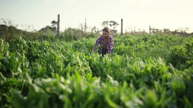 vídeos de stock e filmes b-roll de there's nothing like a few hours of dirt therapy - agricultora