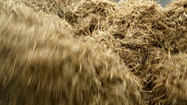 vidéos et rushes de hay - foin