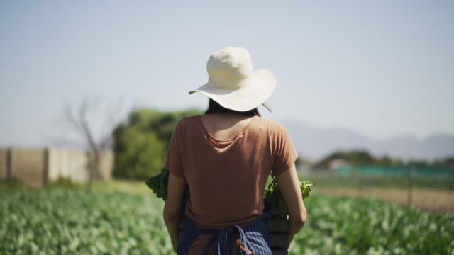 These are the fruits of her labour 4k video footage of an unrecognizable female farmer walking through her crop field while carrying a crate full of fresh produce during the day horticulture stock videos & royalty-free footage