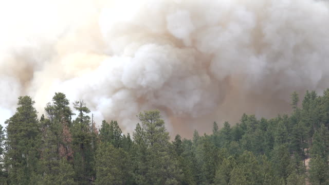 CLOSE UP: Thick black smoke trail rising from pine trees burning in hill fire video
