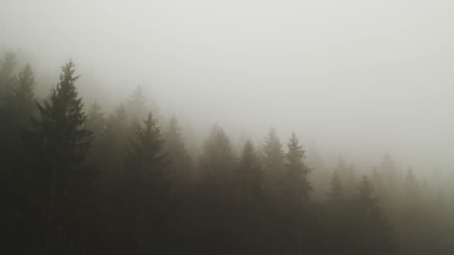 Thick fog covering a forest