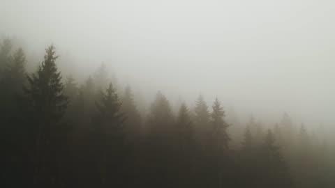 vídeos y material grabado en eventos de stock de niebla gruesa que cubre un bosque - niebla