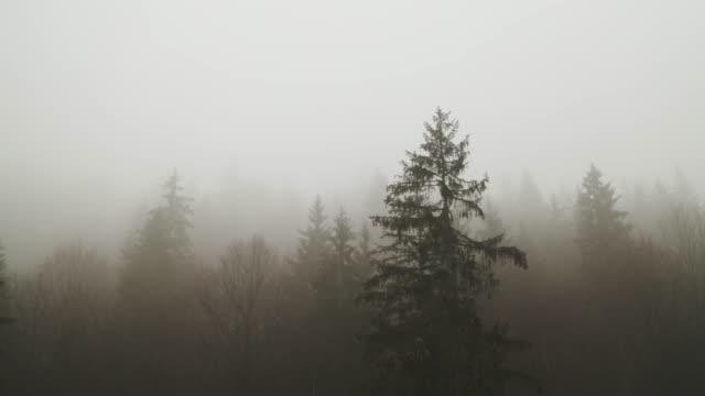 숲을 덮는 두꺼운 안개 - 불길한 스톡 비디오 및 b-롤 화면