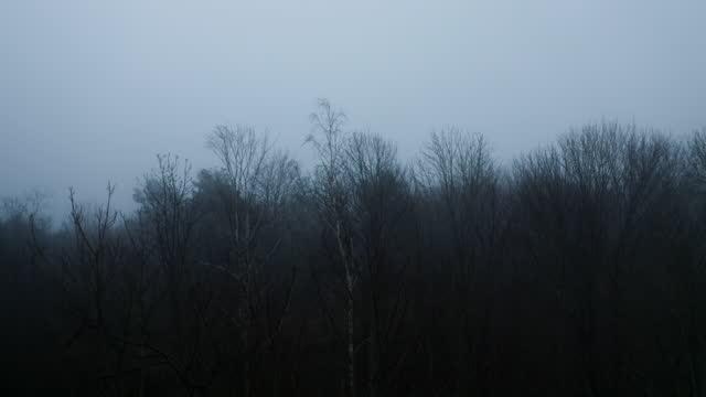 숲 위에 짙은 안개 - 불길한 스톡 비디오 및 b-롤 화면