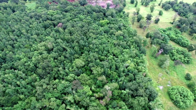thick forest and swampy land seen from the air high above texas and louisiana border - болото стоковые видео и кадры b-roll