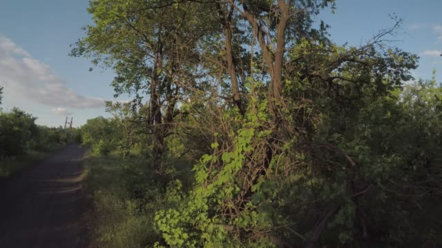 thickets of wild grapes and trees in warm soft rays of eternal light, smooth movement of the video camera forward - parte della pianta video stock e b–roll