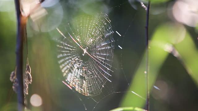 tunn spindelnät rör sig försiktigt av vind i sommarskog. - spindelväv bildbanksvideor och videomaterial från bakom kulisserna