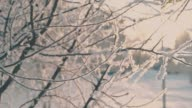 istock thin tree branches covered with hoarfrost in winter park 1269123114