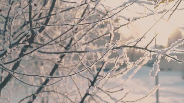 rami di alberi sottili coperti di hoarfrost nel parco invernale - ramo parte della pianta video stock e b–roll