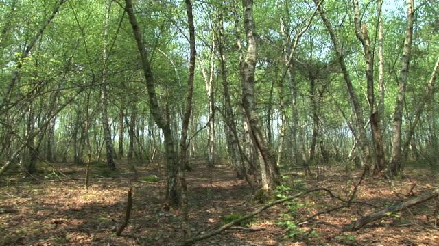 HD: Thin trees video