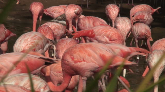 (hd1080i) think pink flamingos - {{searchview.contributor.websiteurl}} stock videos & royalty-free footage