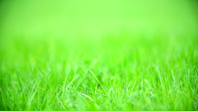 This beautiful green grass is usable for many things. It can be used for football playing, for children game, for walking or just for lying on  it. video