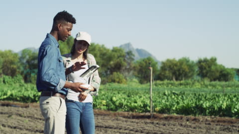 è così che la tecnologia aiuta l'agricoltura di oggi - agricoltura video stock e b–roll
